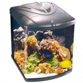 corel A Guide to Growing and Maintaining Coral for a Stylish Aquarium