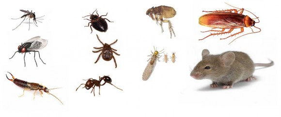 unwanted-household-pests